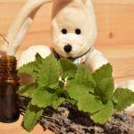 Workshop: Ätherische Öle für Kinder