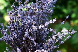 Aromatherapie ätherischen Ölen